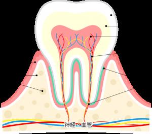 糖質過多:歯が黄色いのは糖化のせい!?